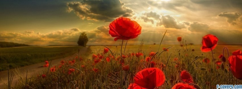 flowers poppy red 2 facebook cover