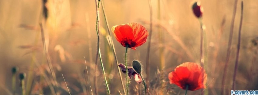 flowers poppy red 3 Facebook Cover timeline photo banner for fb