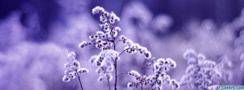 Flowers Purple Facebook Cover Timeline Photo Banner For Fb
