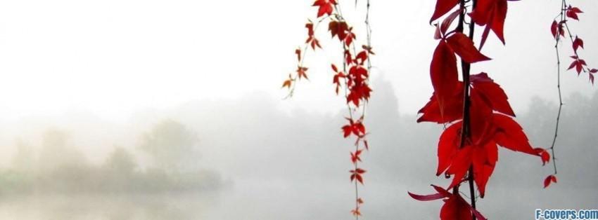 flowers-red-facebook-cover-timeline-banner-for-fb.jpg