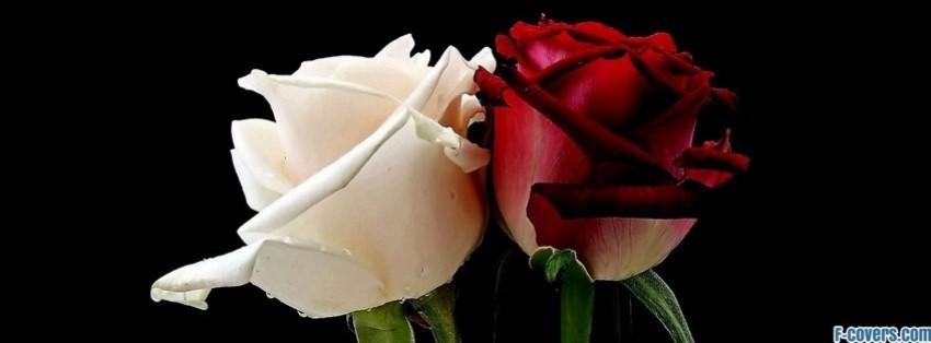 Blue Rose Facebook Timeline Cover Image Middot Flowers