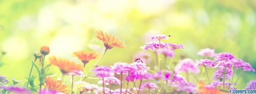flowers spring bumblebee bright bombus facebook cover