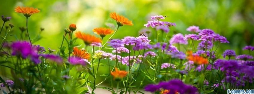 Flowers Summer Garden Facebook Cover