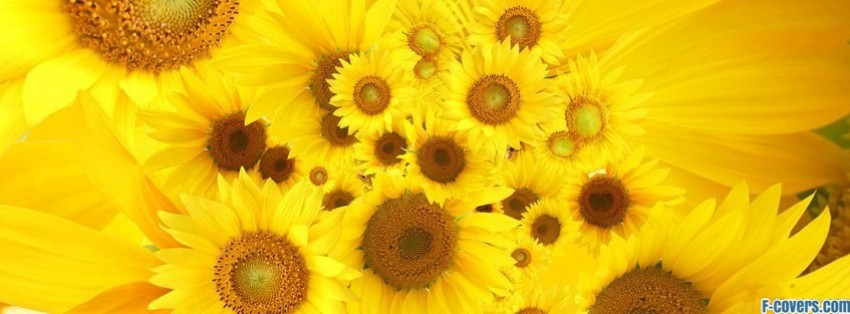 flowers sunflowers 15 facebook cover