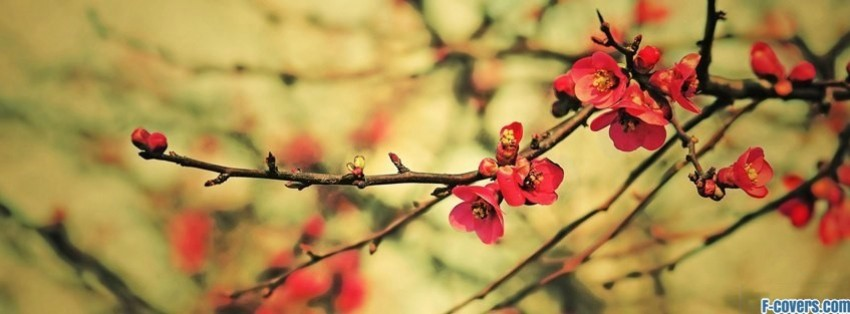 Pink Flower Facebook Cover
