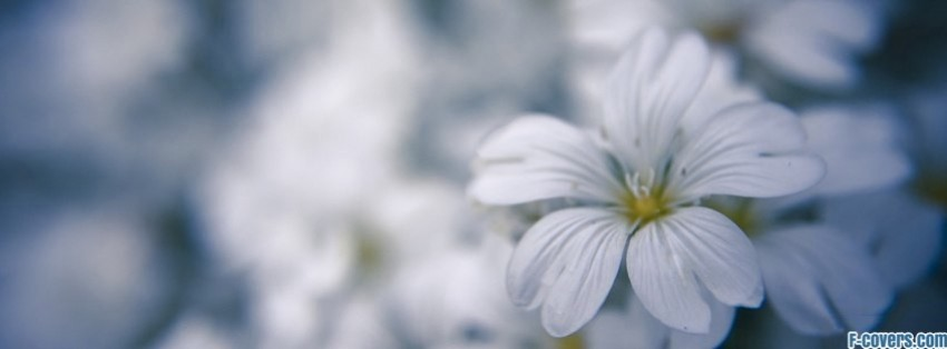 Flowers White Macro Facebook Cover Timeline Photo Banner For Fb