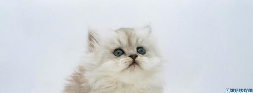 Fluffy Kitten Desktop Facebook Cover