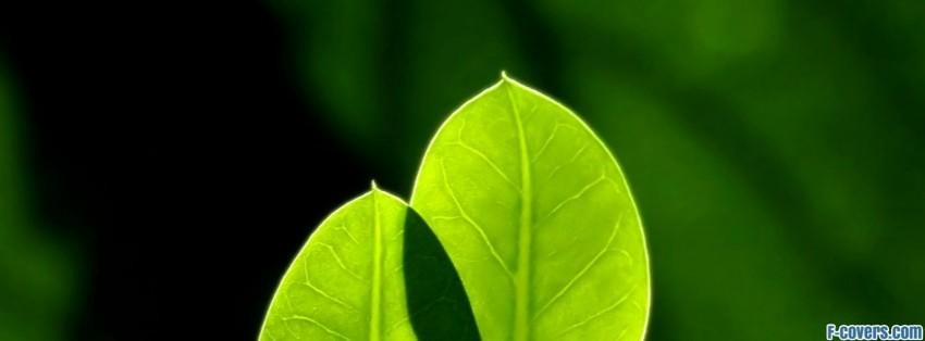 Fresh leaves facebook cover timeline photo banner for fb for Fresh art photography facebook