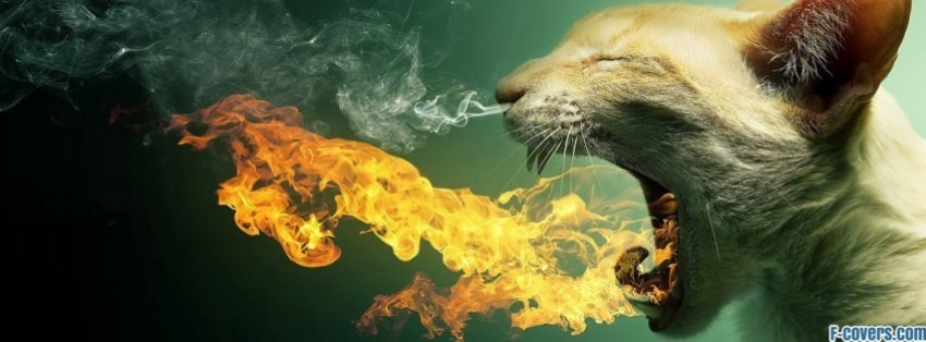 Funny Breathing Pictures Funny Cat Fire Breath Facebook