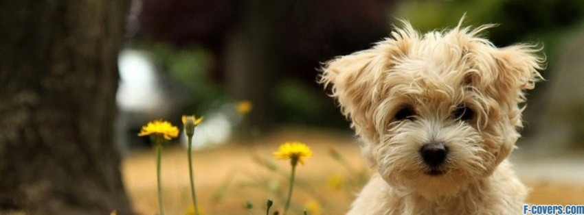 Cute Dog Facebook Cover Timeline Photo Banner For Fb