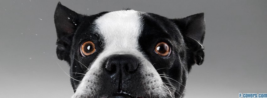 funny dog facebook cover timeline photo banner for fb