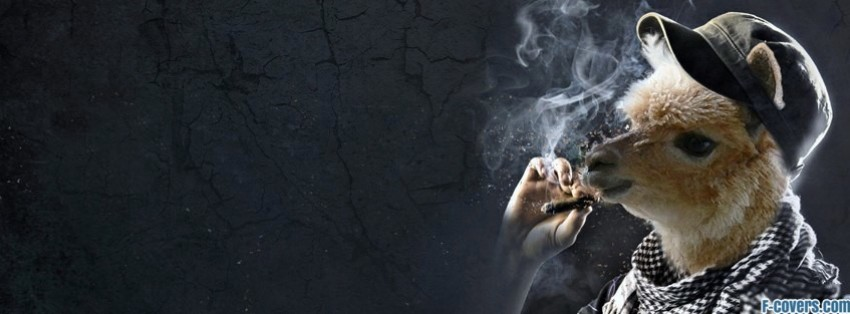 Funny smoking llama facebook cover timeline photo banner for fb - Funny and awesome wallpapers ...