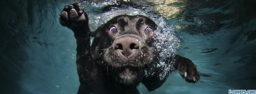 funny underwater dog Facebook Cover timeline photo banner for fb | 850 x 314 jpeg 66kB