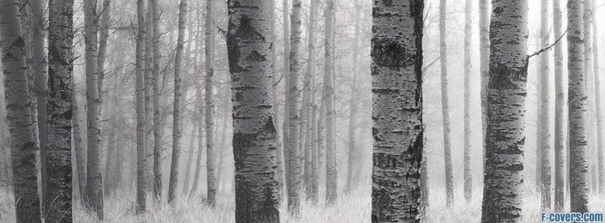 Gray Wolf Facebook Cover Timeline Photo Banner For Fb