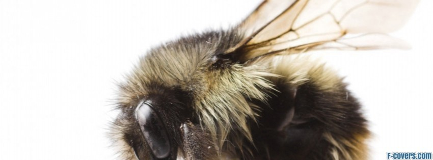 hairy bumblebee facebook cover