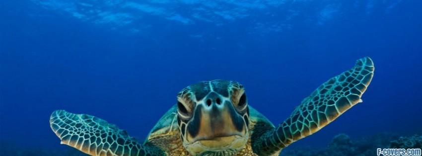 hawksbill sea turtle facebook cover timeline photo banner