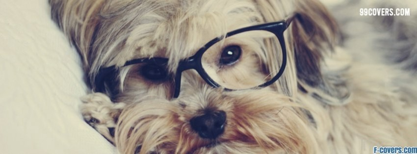hipster glasses dog facebook cover