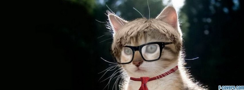 hipster nerd cat facebook cover