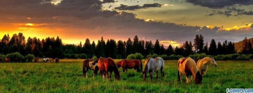 horses grazing field facebook cover
