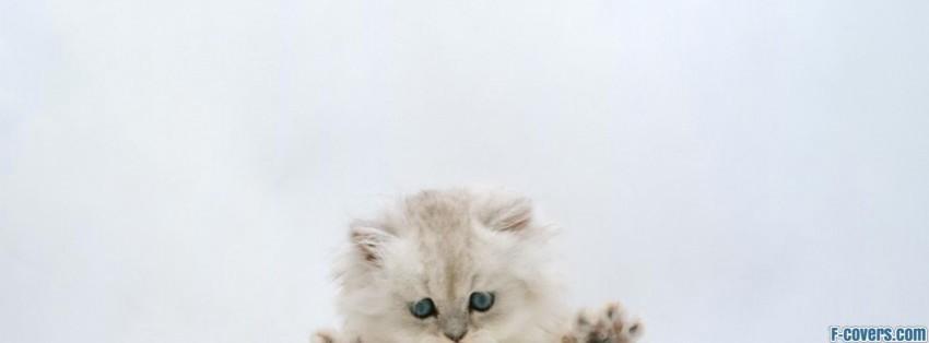Kitten Desktop Facebook Cover