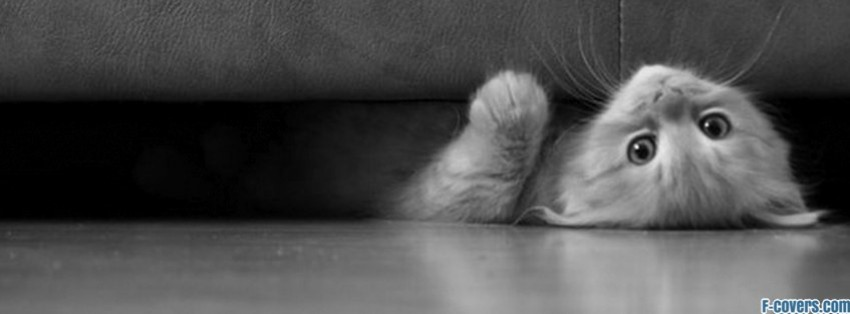 kitty and the couch facebook cover