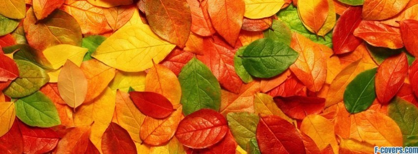 lots of leaves facebook cover