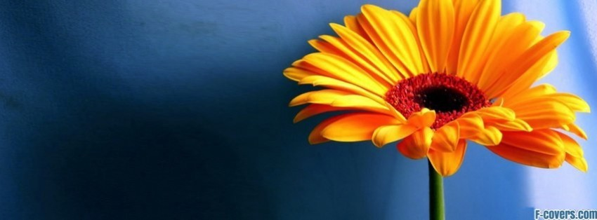 orange yellow flower facebook cover