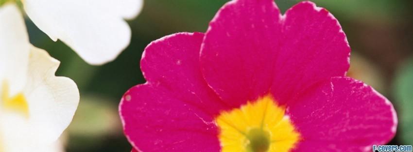 ... - For Facebook Timeline Flowers Facebook Cover Photos For Timeline