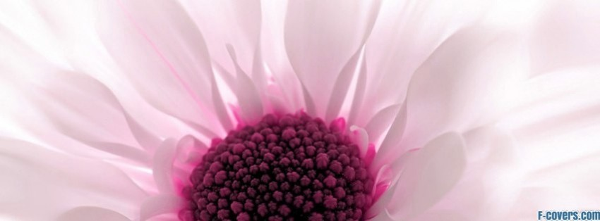 pink white flower bud facebook cover