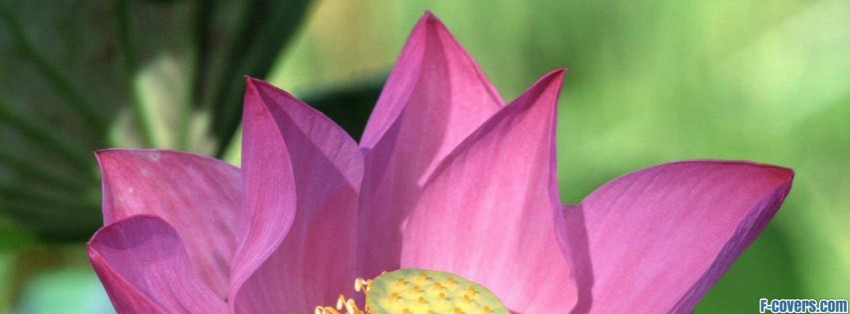 lotus flower facebook cover timeline photo banner for fb, Beautiful flower
