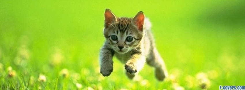 running kitty facebook cover
