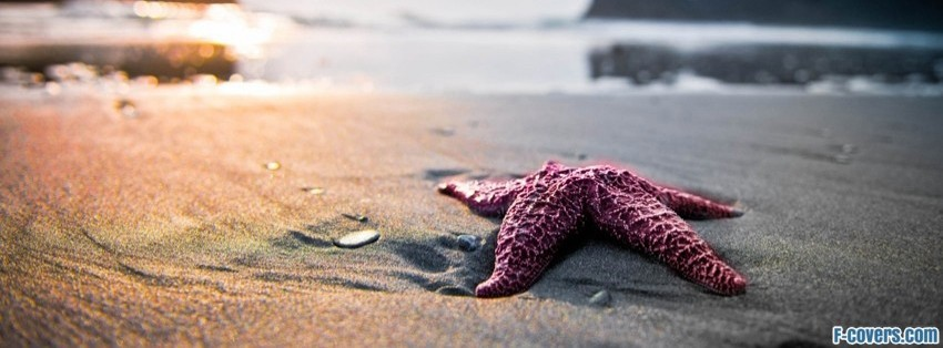 starfish on beach facebook cover