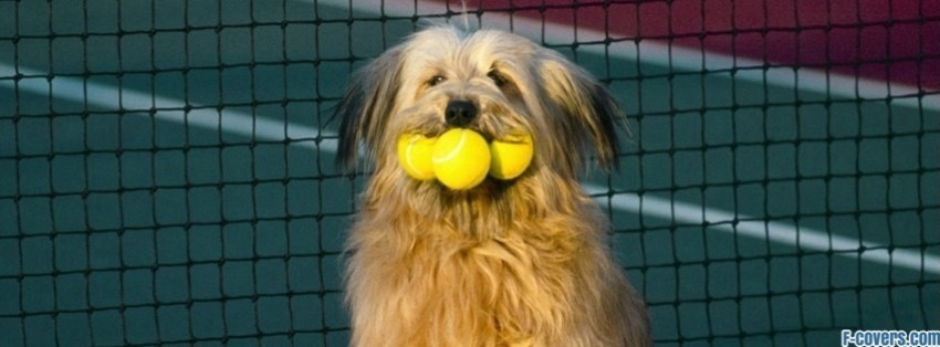 tennis ball dog facebook cover