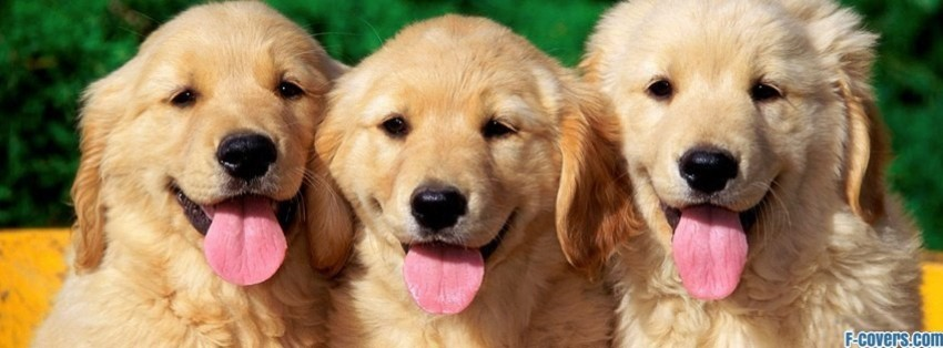 three happy dogs facebook cover
