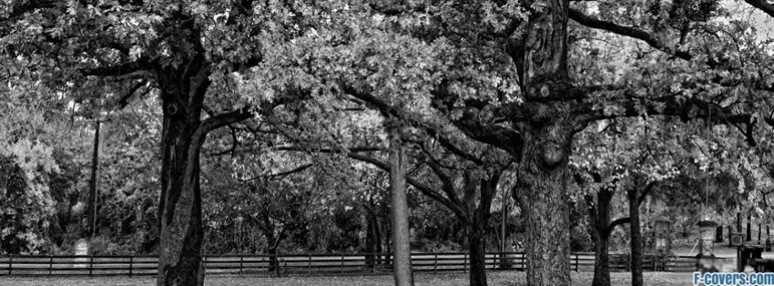 trees 1 facebook cover