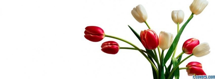 tulip bouquet facebook cover