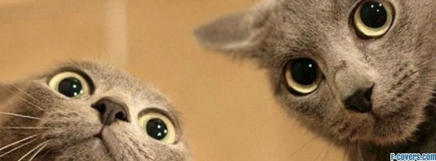 two faced cats facebook cover