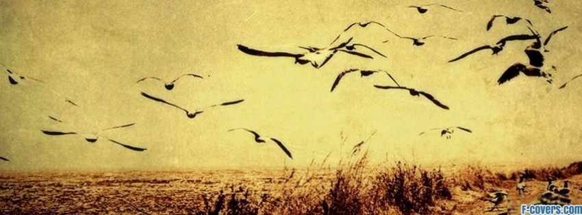 vintage birds landscape facebook cover