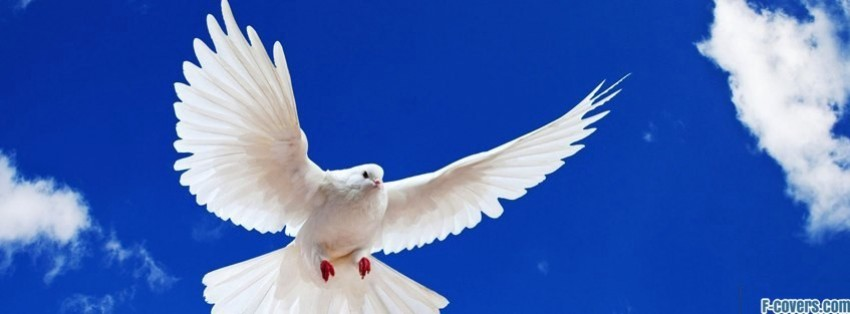 white dove facebook cover