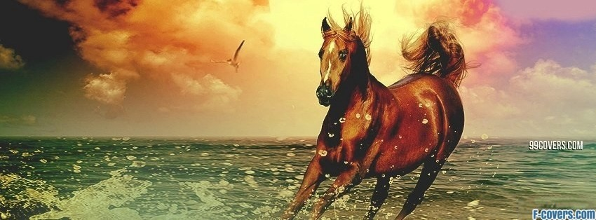 Animals Facebook Covers