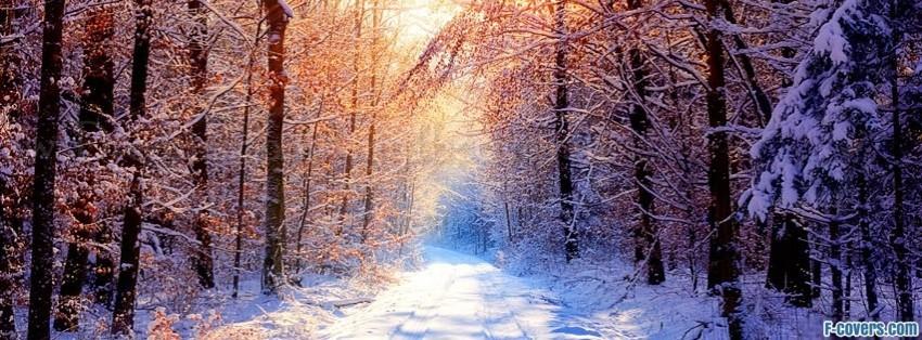 ... cover add to winter bench joe chen winter winter collage winter tree
