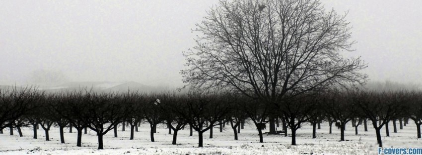winter tree line facebook cover