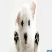 Dog Against Glass Facebook Cover Timeline Photo Banner For Fb